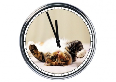 Orologio da parete in acciaio  Gatto